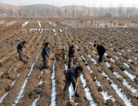 North-Korea-Workers